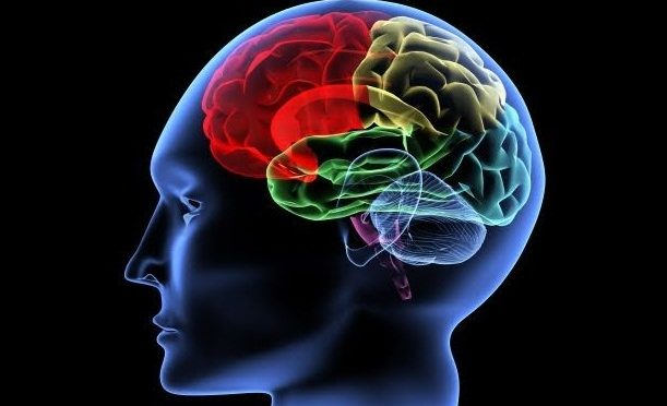 Effects of Pot on the Young Brain