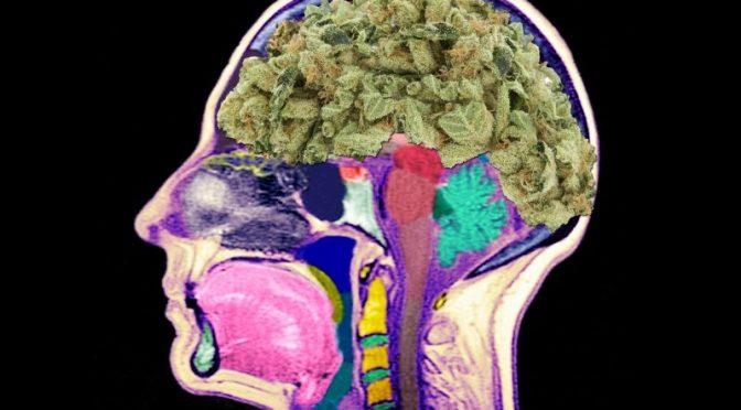 Do You Know Marijuana?