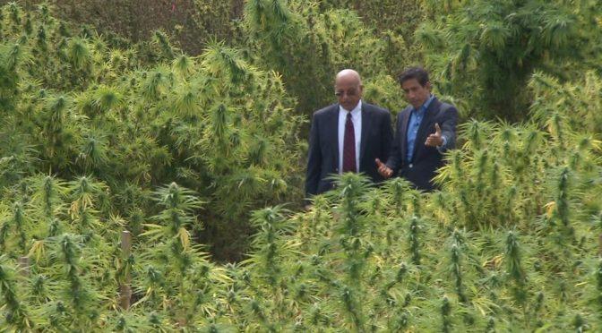 Cannabidiol is not Medical Marijuana
