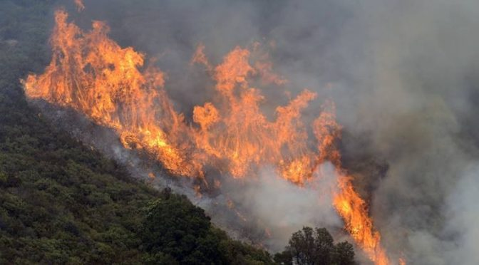 Big Sur Wildfire Smokes Out Illegal Pot Growers